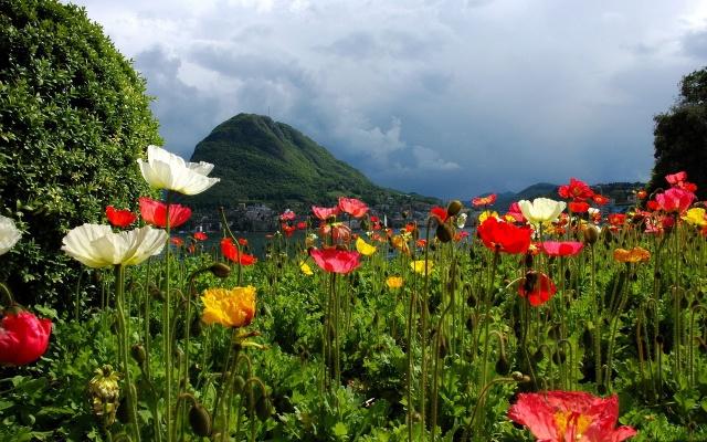 květiny, hory, letovisko, příroda, počasí, zataženo, město, krásně, záliv
