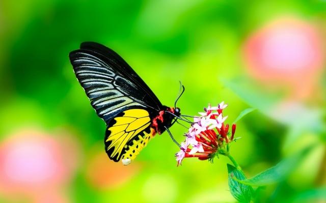 macro, photo, theme, butterfly, flower, nature, beautiful
