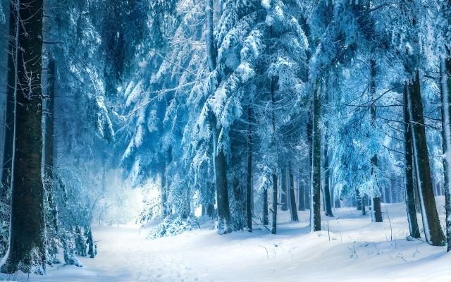 зима, лес, снег, красиво, фото, позитив