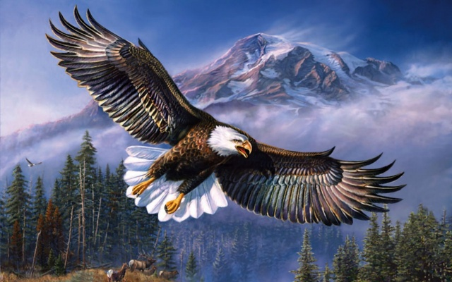 eagle, wind, mountain, TCD, sky, bird