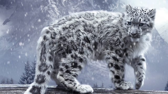 whitw, леопард, гора, сніг, дикий