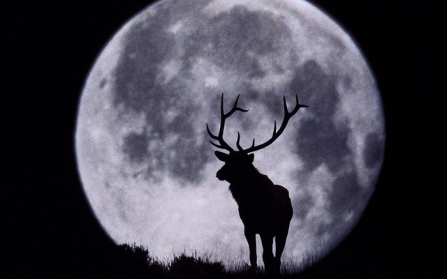 deer, silhouette, night, moon, sky, forest
