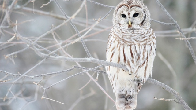зима, дерево, снег, птица, дикий