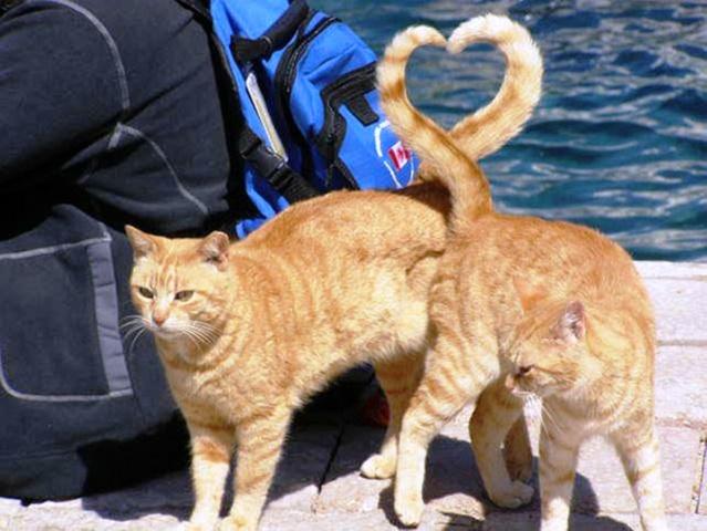 kočky, a srdce