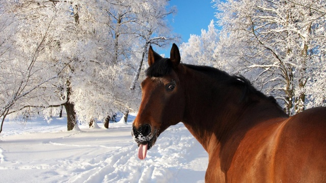 nature, horse, winter, photo, positive