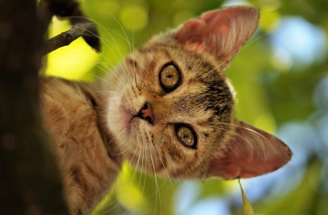 кошка, кот, котэ, дерево, лето, листва, голова, морда