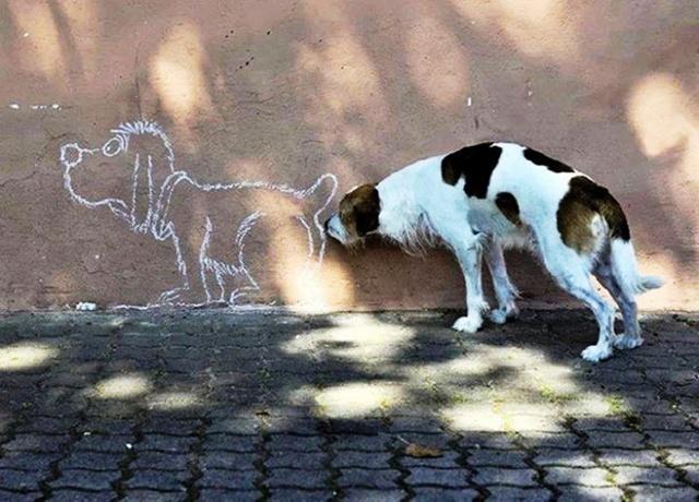 стена, рисунок, собака, ситуация...