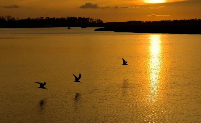 захід, річка, птахи, берега, креатив