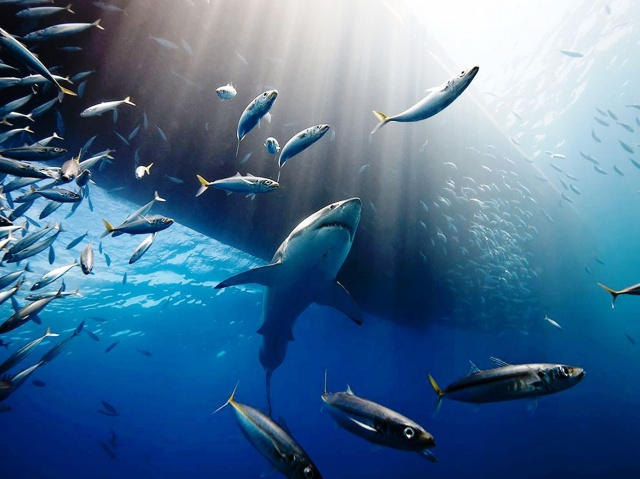 the storm of oceans, great white shark, underwater photography