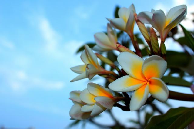 květiny, Egypt, léto