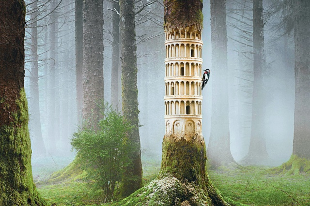 les, stvoření, pták, datel, příroda, mlha