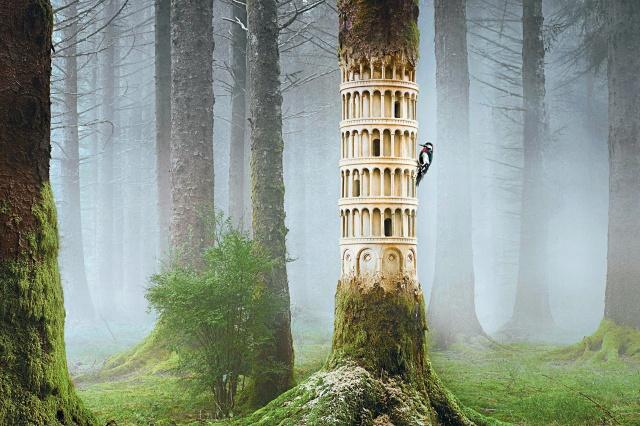 forest, creation, bird, woodpecker, nature, fog
