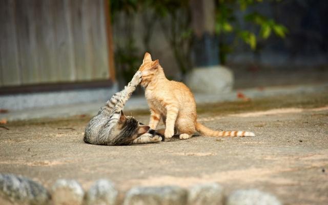 кошки, игра, хищники, малолетки, макро, фото, тема