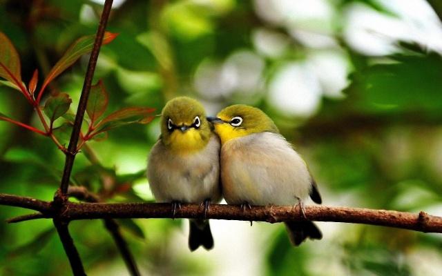 птахи, дерево, листя, ліс
