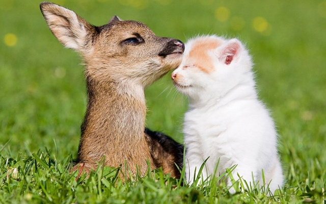 fawn, and kitten