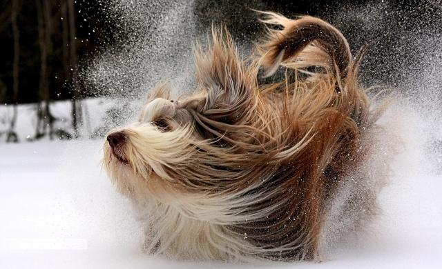 природа, зима, собака, біг, макро, фото, позитив