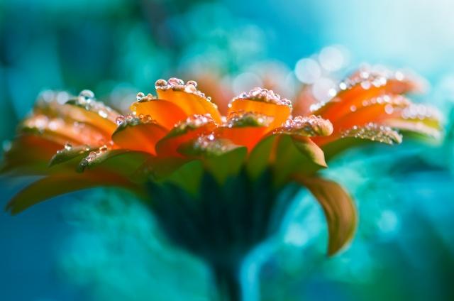 макро, фото, цветок, капли, вода, красиво