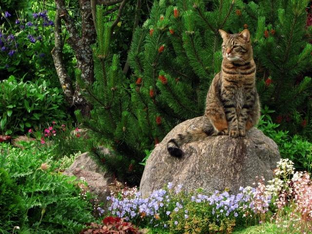 cat, stone, grass, greens