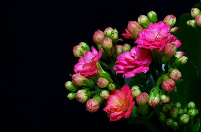 květiny, kytice, flora
