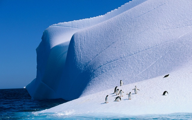 nature, ice, iceberg, penguins, winter, the ocean