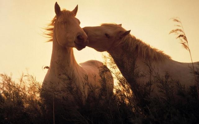horses, horses, light, grass, animals, horses, light, grass