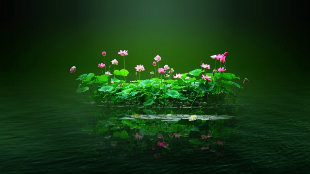 water, the pond, flowers, leaves, island