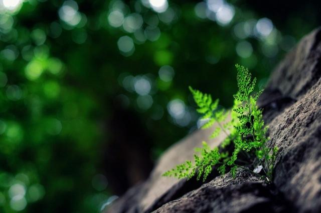 stones, fern, beauty, background