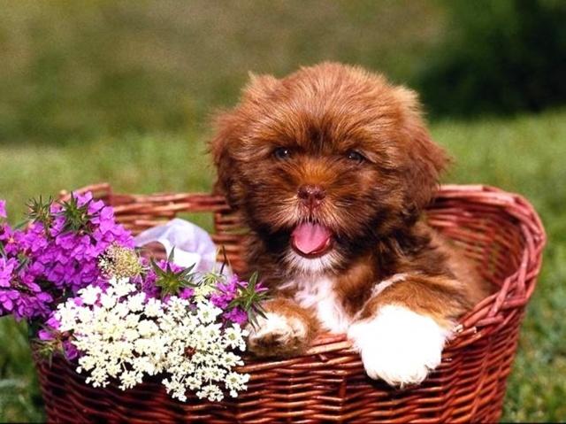 собака, цветы, корзина, зеленый фон