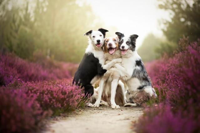 природа, макро, фото, собаки, друзья, ситуация, позитив