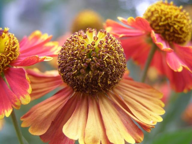 makro, květiny