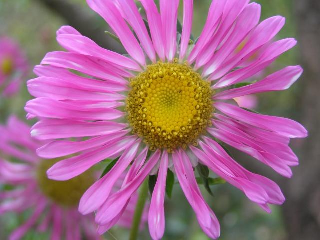 макро, цветы