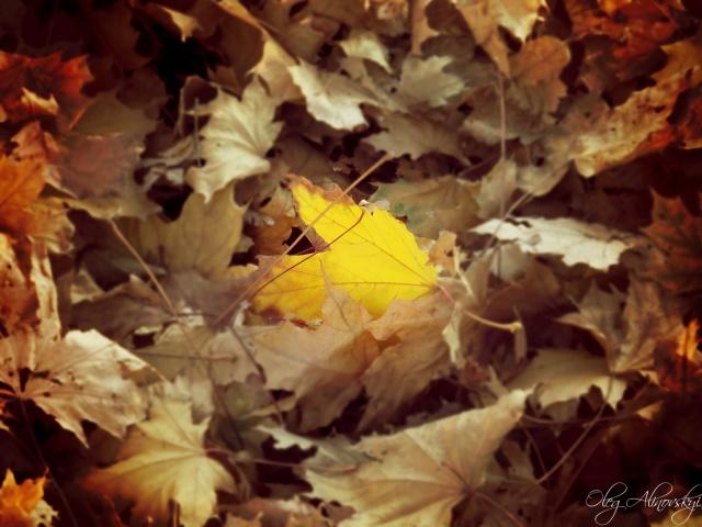 осень, листья, осенний листок