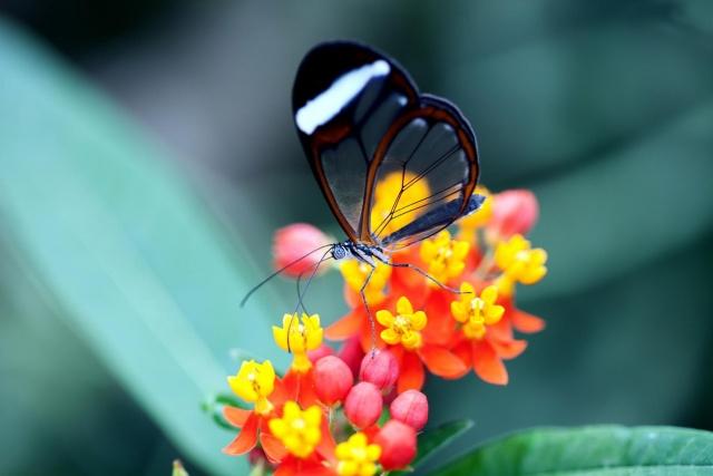 макро, фото, цветы, природа, бабочка