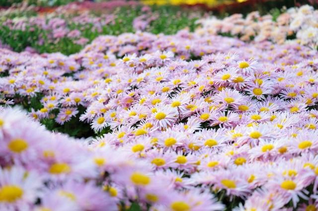 макро, Яркие, цветы, поле, размытость