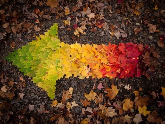 осень, листья, стрелка, переход
