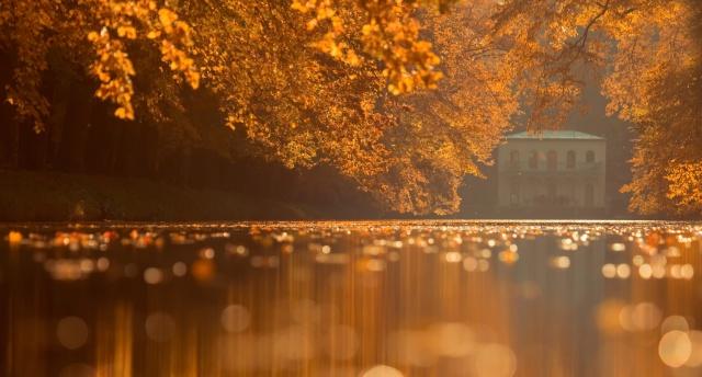 природа, осень, пруд, парк, вода, деревья, макро, листья, красиво