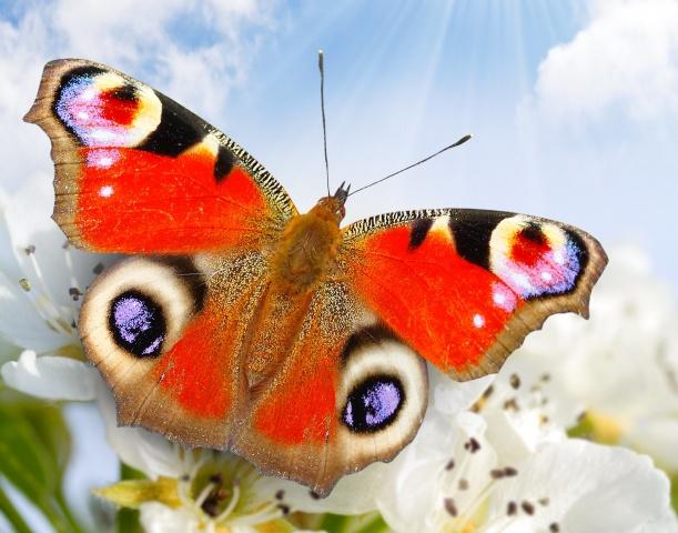 motýl, zblízka, květiny, nebe