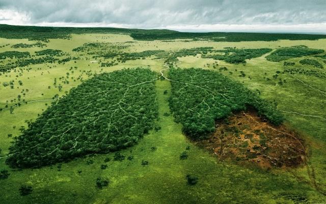foto, tvůrčí, pravda, les, příroda, lehké, škodu, osoby