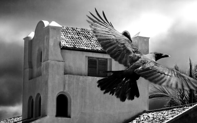 Черно-Белая, птица, здание
