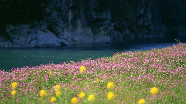 řeka, voda, tráva, květiny, pole, foto