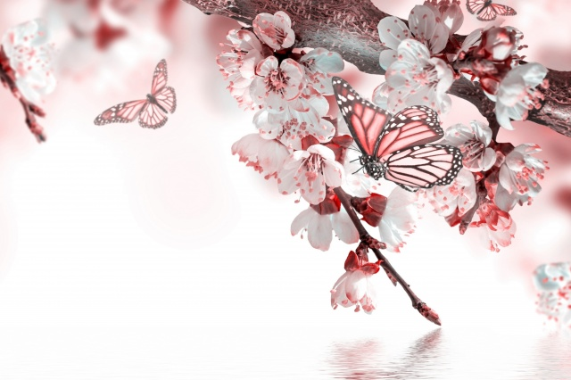 spring, cherry, macro, photoshop, butterfly, flowers, branch, white background