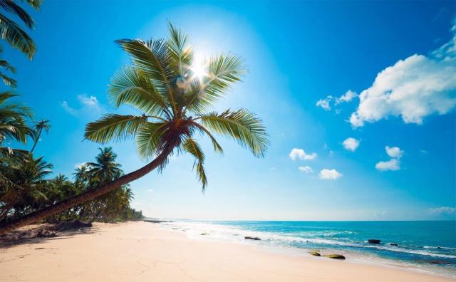природа, тропики, лето, пляж, пальмы, океан, небо, солнце, тропический