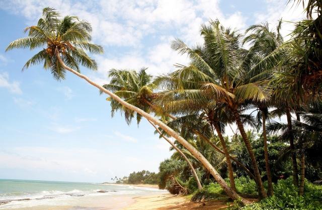 příroda, léto, v tropech, pláž, palmové, ráj, nebe, mraky, krásně