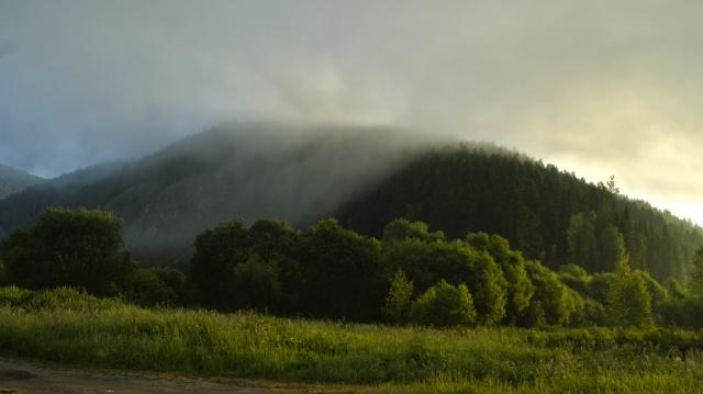 léto, příroda, moře, řeka, hory, les, трова, paseka, makro