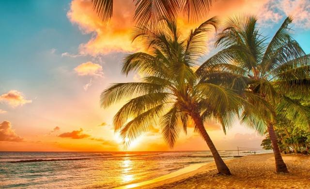 nature, summer, tropics, palm trees, the beach, the ocean, the sky, sunset, beautiful