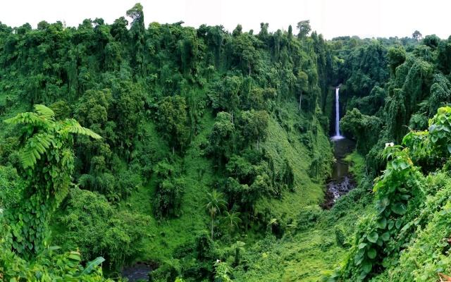 tropics, nature, waterfall, jungle, palm trees, trees, green background