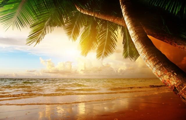 pláž, pobřeží, moře, oceán, palm, letní, léto, palmové, pláž