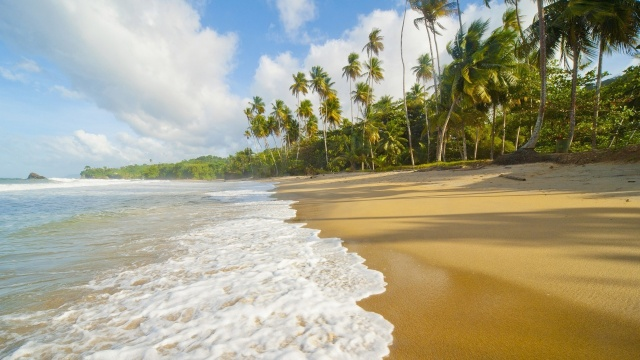 nature, summer, tropics, the beach, the ocean, palm trees