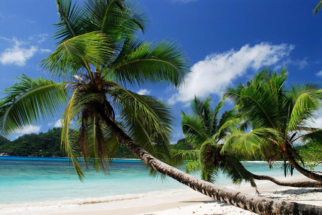 coast, beach, paradise, summer, ocean, palm, tropical, the ocean, tropics
