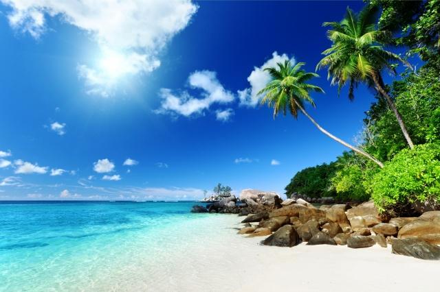 summer, summer, nature, the beach, palm trees, the sky, the sun, stones, tropics